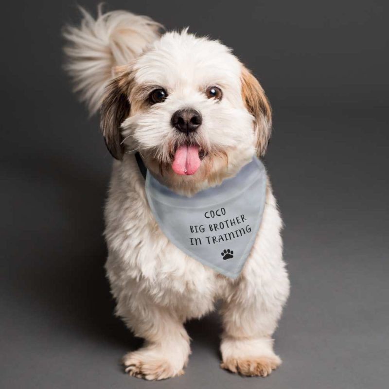 Personalised 'Your Message' Dog Bandana