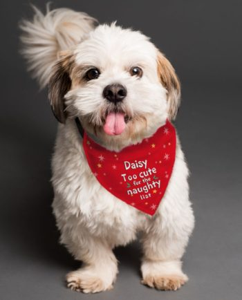 Personalised Christmas Too Cute Dog Bandana